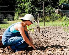 Laura planting